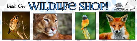 Shop Tri County Wildlife Care